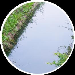 野田市の自然豊かな炭でろ過したキレイな水を与えています
