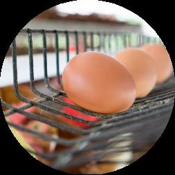 ご注文翌日にその日産まれた卵を発送