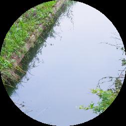 野田市の自然豊かな炭でろ過したキレイな水